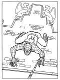 Spiderman si arrampica