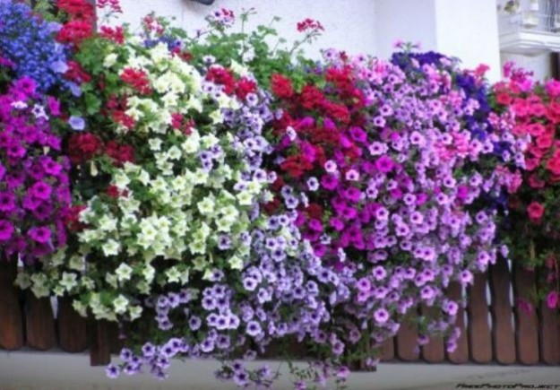 Piante e fiori da balcone perenni o resistenti: quali sono e come curarle [FOTO]