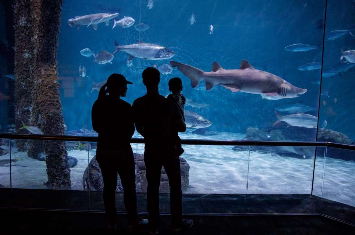 Mark, Priscilla e Max all'acquario