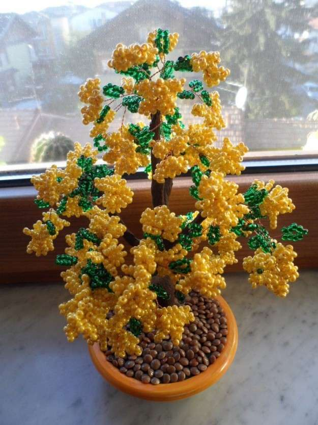 Bonsai di mimose di perline